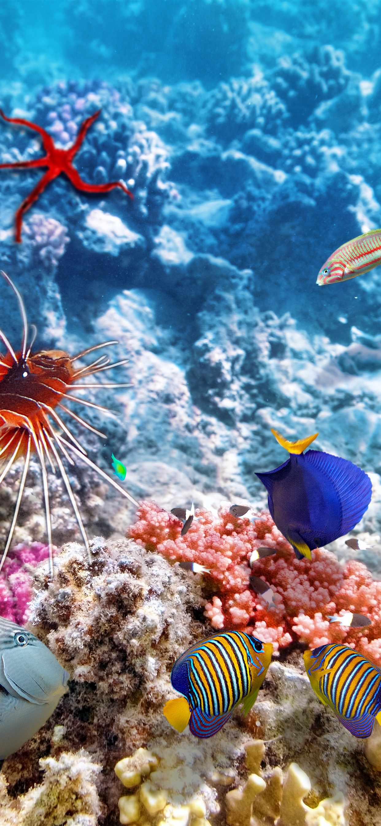 Colorful Fish Underwater Sea Clownfish 1242x2688 Iphone