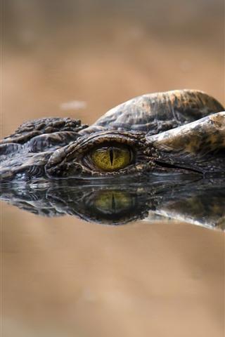 iPhone Wallpaper Crocodile, eyes, water