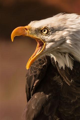iPhone Wallpaper Eagle, angry, beak