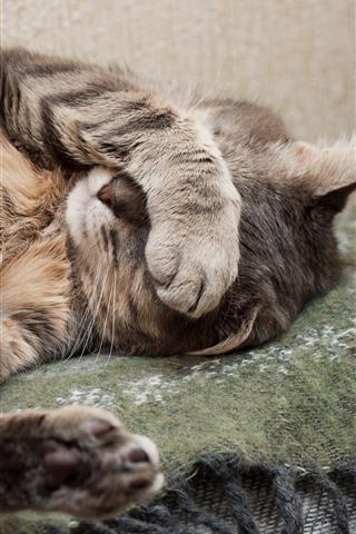 iPhone Wallpaper Funny cat, shy