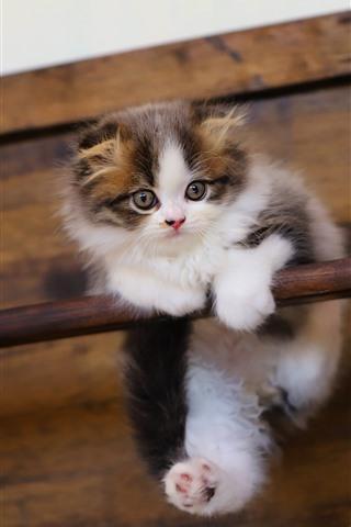 iPhone Wallpaper Furry kitten, stick, pet