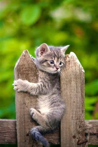 iPhone Wallpaper Kitten, fence