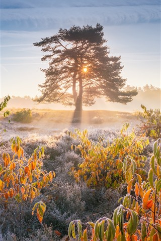 iPhone Wallpaper Morning, sun rays, trees, leaves, frost, autumn