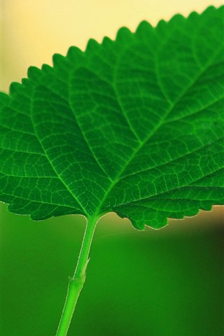 iPhone Wallpaper One green leaf close-up, hazy background