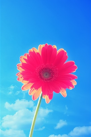 iPhone Wallpaper One red gerbera flower, blue sky