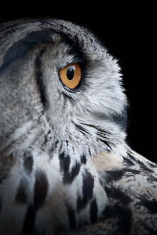 iPhone Wallpaper Owl head, eye, black background