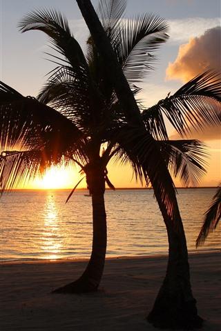iPhone Wallpaper Palm trees, sunset, clouds, beach