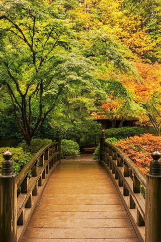 iPhone Wallpaper Park in the autumn, trees, wood bridge