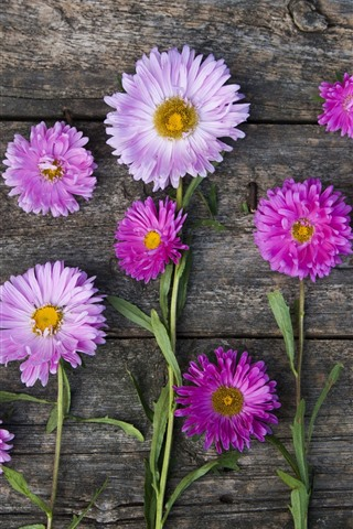 iPhone Wallpaper Pink and white asters, wood background