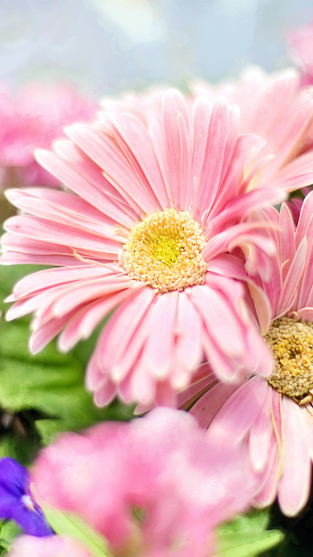 Для, картинки цветов на телефон андроид