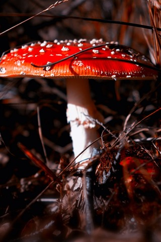iPhone Wallpaper Red mushroom, white point