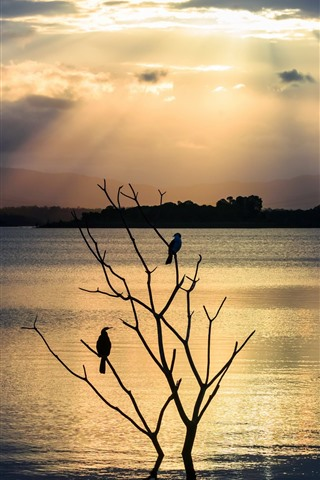 iPhone Wallpaper River, tree, two birds, silhouette