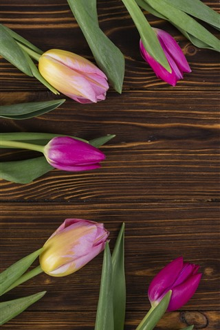 iPhone Wallpaper Some pink tulips, round, wood board background