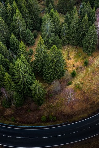 iPhone Wallpaper Top view, trees, bend road