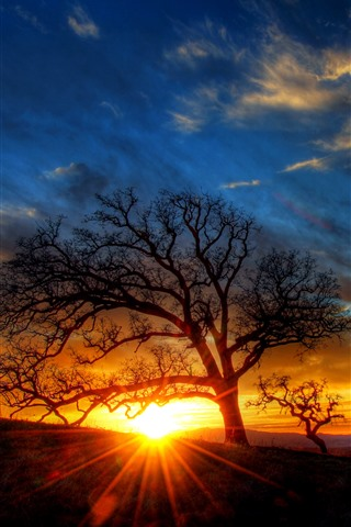 iPhone Wallpaper Tree, sun rays, silhouette, sunset, dusk