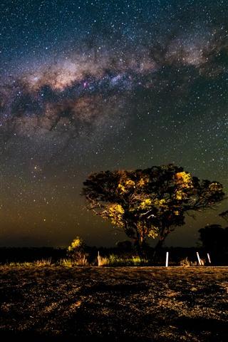 iPhone Wallpaper Trees, starry, sky, night, beautiful scenery