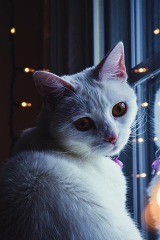 iPhone Wallpaper White cat look back, window, lights