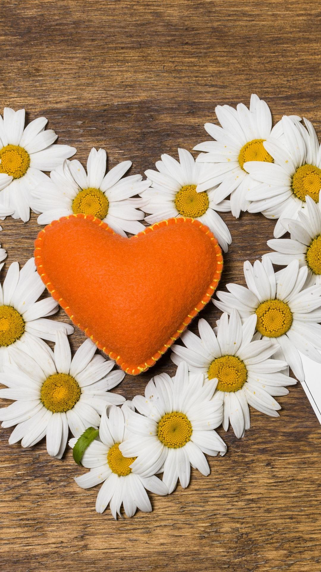 Ромашки сердечком картинки