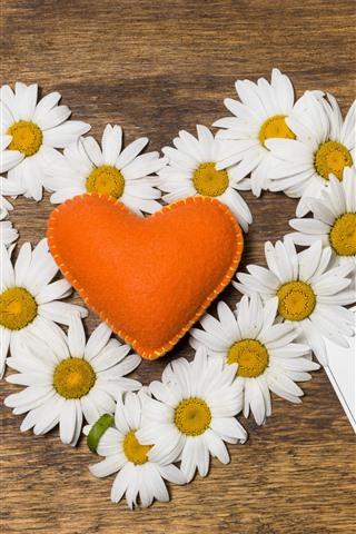 iPhone Wallpaper White chamomile, orange love heart