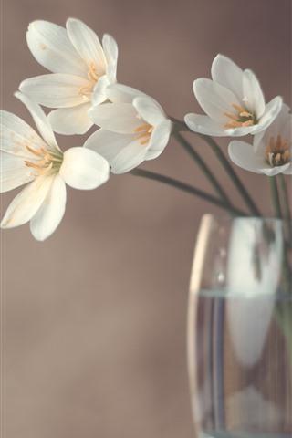 iPhone Wallpaper White orchid, glass cup, hazy