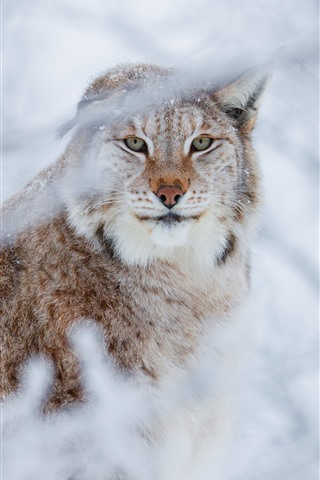 iPhone Wallpaper Wildcat, lynx, hazy, twigs