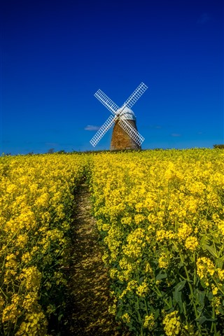 iPhone Wallpaper Windmill, yellow rapeseed flowers