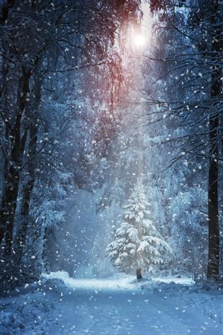 iPhone Wallpaper Winter, trees, snowy, sunshine