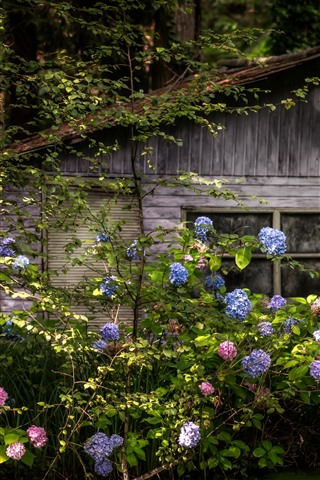 iPhone Wallpaper Wood hut, forest, hydrangea
