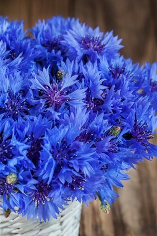 iPhone Wallpaper Blue cornflowers, bouquet