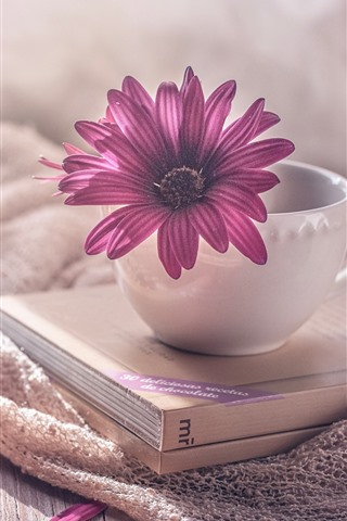 iPhone Wallpaper Cup, books, purple osteospermum flower