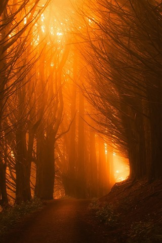 iPhone Wallpaper Forest, trees, path, sun rays, fog, morning