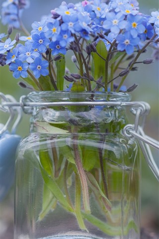 iPhone Wallpaper Forget-me-not flowers, little blue flowers, glass bottle