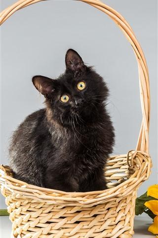 iPhone Wallpaper Furry black kitten, basket, sunflower