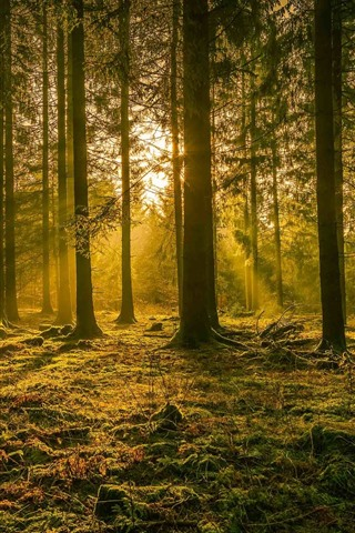 iPhone Wallpaper Germany, trees, sun rays, glare, nature