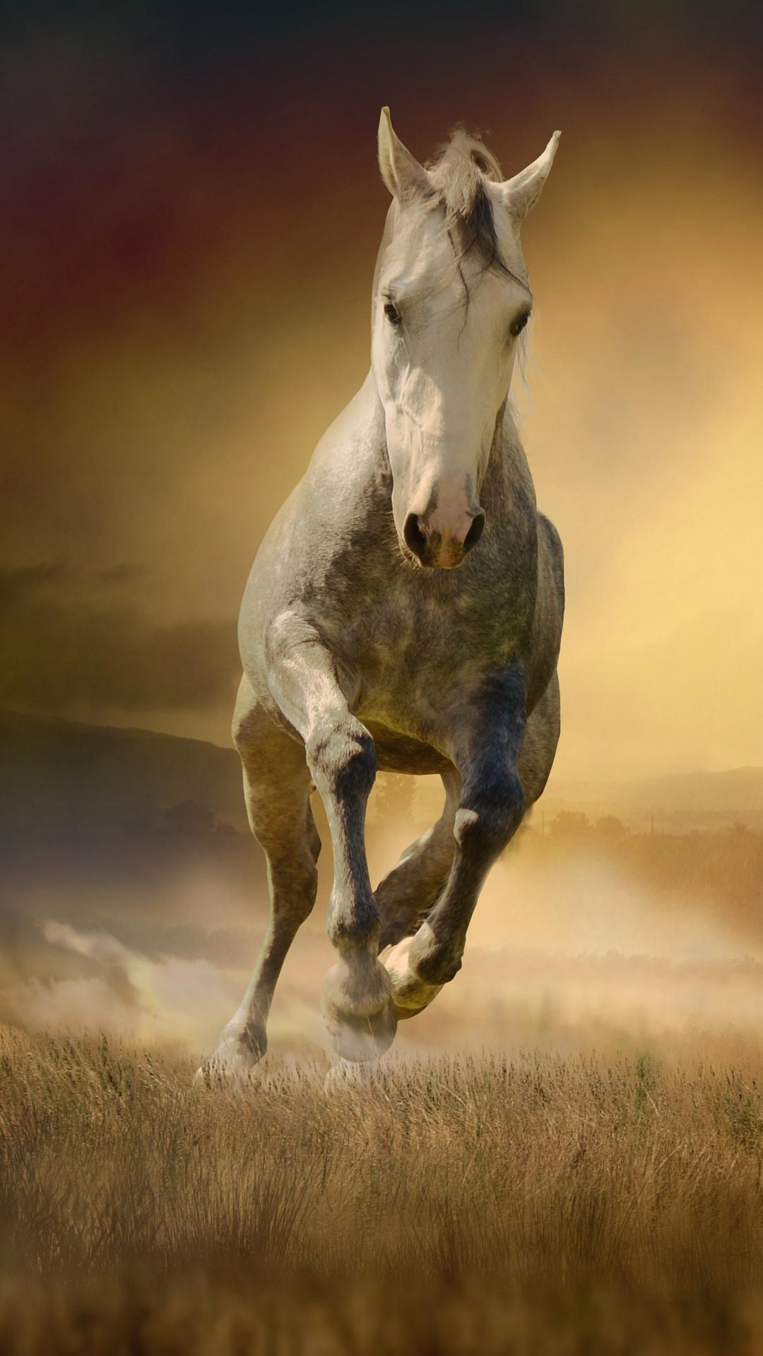Wallpaper Horse Running Front View Grass Fog Morning