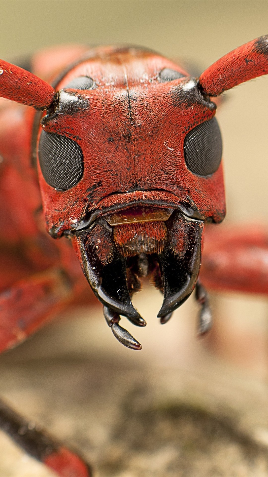 Wallpaper Insect macro photography, head, mouth, antennae