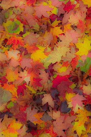 iPhone Wallpaper Many red and yellow maple leaves, autumn