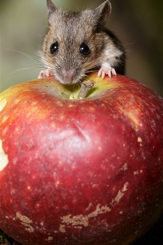 iPhone Wallpaper Mouse and red apple