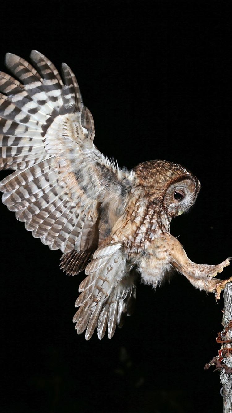 Night, owl flight, wings, stump, black background 750x1334
