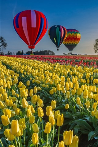 iPhone Wallpaper Tulips field, hot air balloon