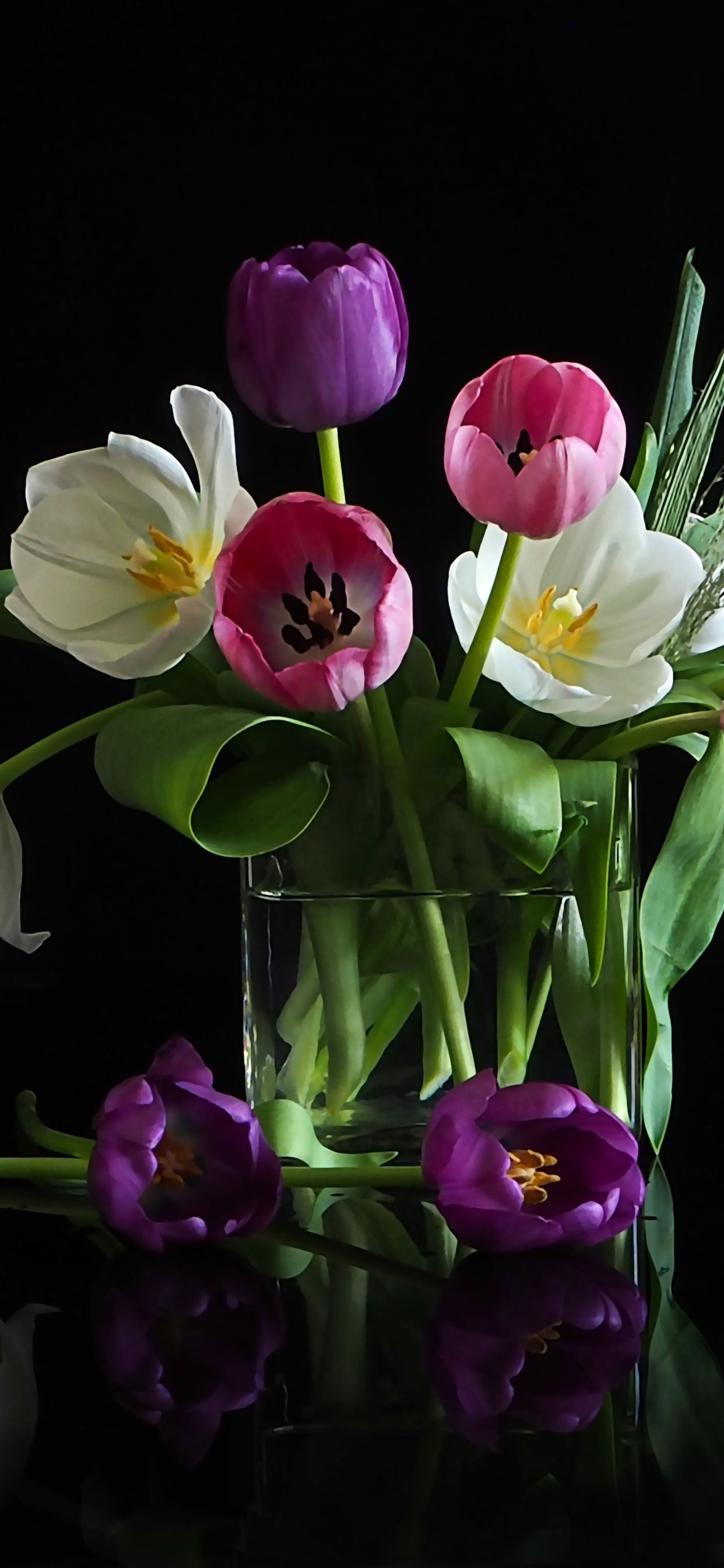 White Pink Tulip Flowers Black Background 1242x2688 Iphone 11 Pro Xs Max Wallpaper Background Picture Image