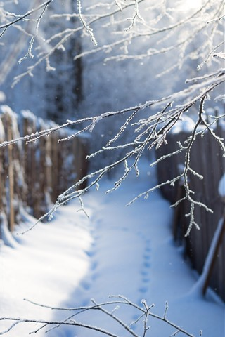 iPhone Wallpaper Winter, snow, twigs, path, fence