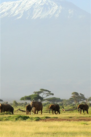 iPhone Wallpaper Africa, one flock of elephants