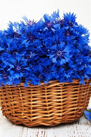 iPhone Wallpaper Blue flowers, cornflowers, basket