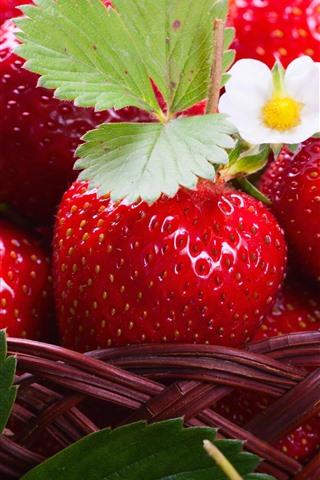 iPhone Wallpaper Delicious strawberries, fruit, flowers