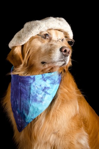 iPhone Wallpaper Funny dog, hat, glasses, scarf