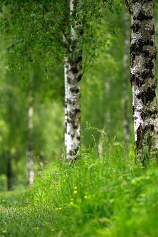 iPhone Wallpaper Green grass, birch, trees, summer