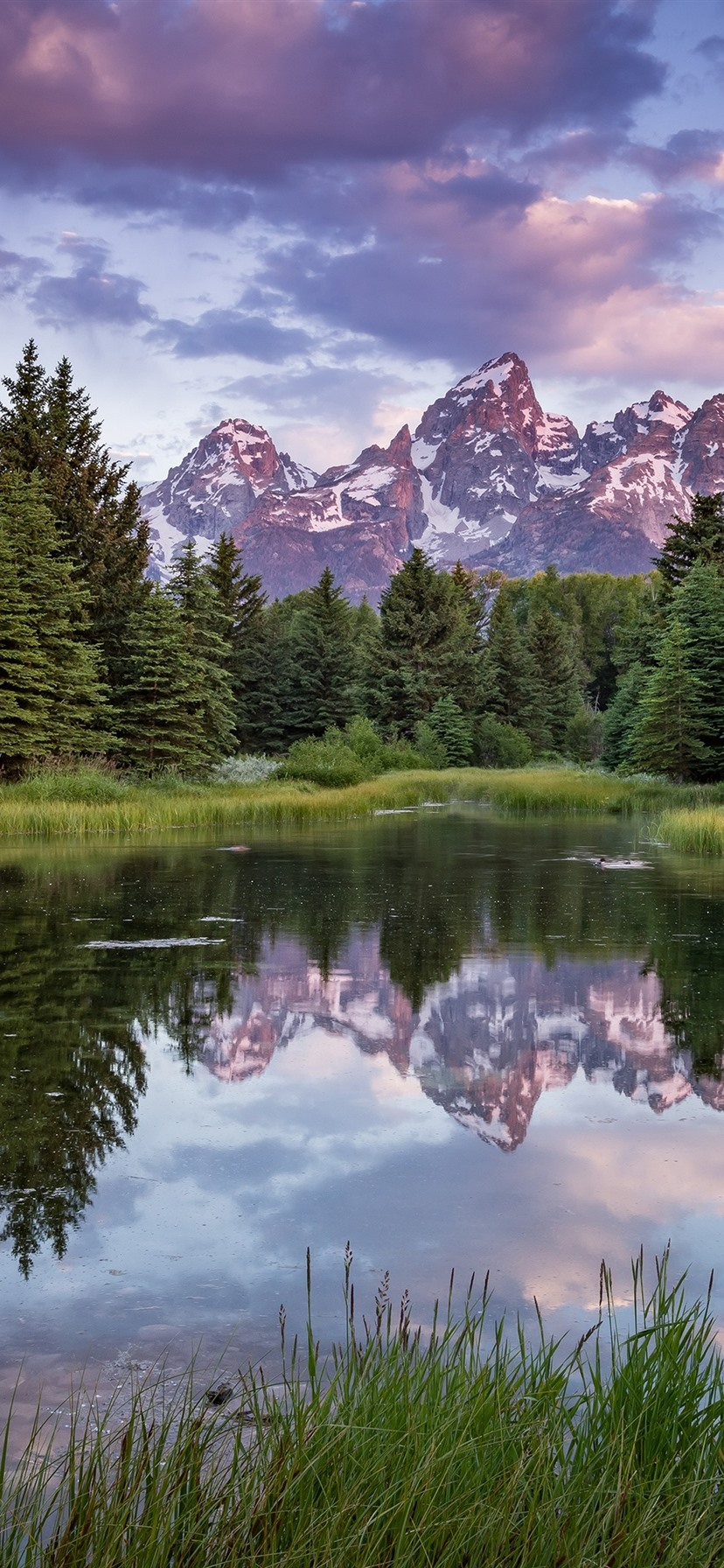 Summer Trees Lake Mountains Nature Landscape 1080x1920 Iphone 8 7 6 6s Plus Wallpaper Background Picture Image