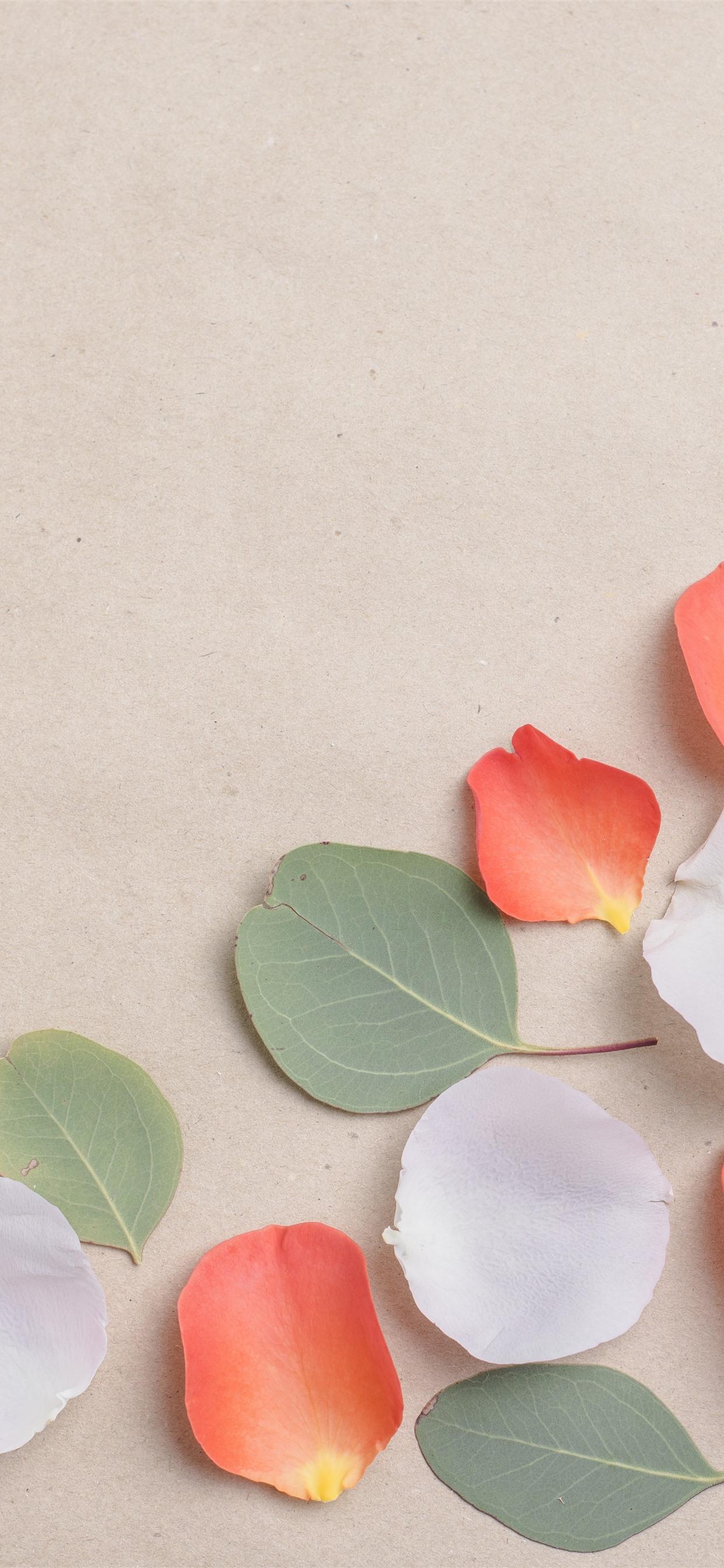 白とオレンジの花びら 緑の葉 1242x2688 Iphone 11 Pro Xs Max 壁紙