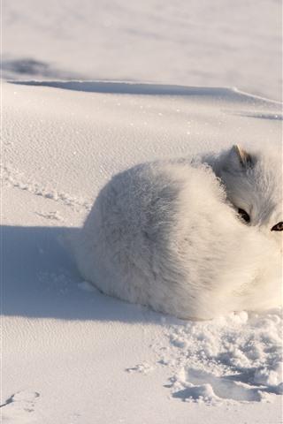 iPhone Wallpaper White fox, snow, shadow